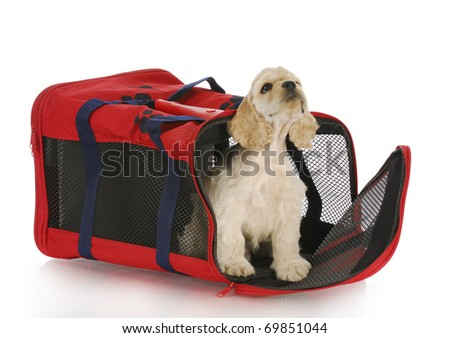 puppy in a crate - american cocker spaniel in a red carrying bag - stock photo