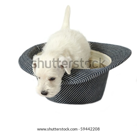 puppy in a hat - stock photo