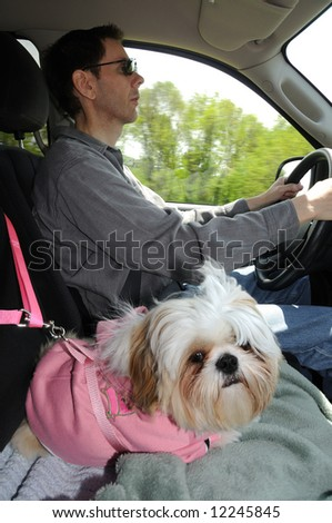 Puppy In A Safety Harness riding in a truck. - stock photo