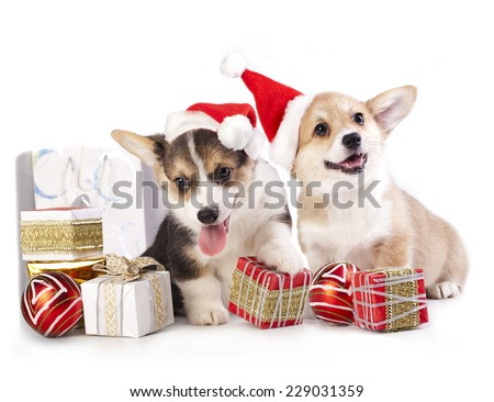 puppy in a Santa Claus hat and present - stock photo