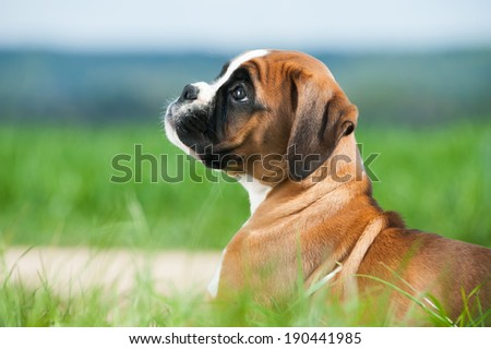 Puppy in a spring meadow - stock photo