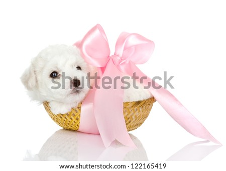 puppy in basket. looking at camera.  isolated on white background - stock photo