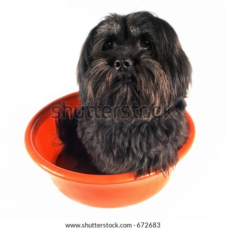 Puppy in Bucket - stock photo