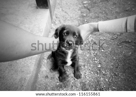 Puppy in embraces of hands - stock photo