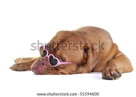 Puppy in Glamour Heart-Shaped Glasses - stock photo