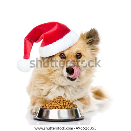 Puppy in red christmas hat lying with a bowl of dry dog food and licked. isolated on white background
