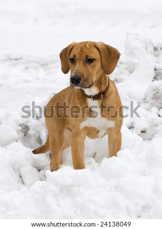 puppy in snow - stock photo