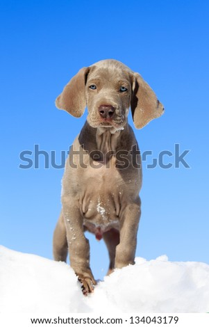 Puppy in snow against sky