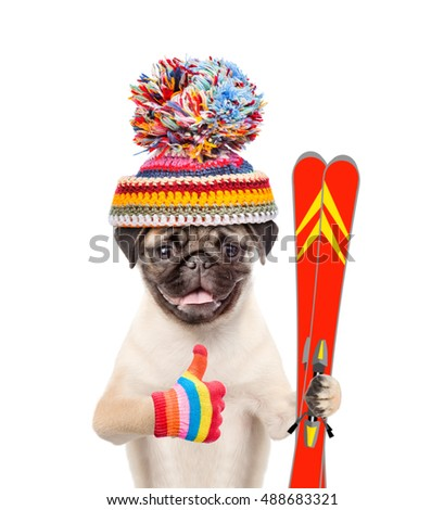Puppy in warm hat holding skiing and showing thumbs up. isolated on white background