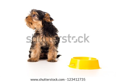 Puppy is sitting with a bowl isolated on white background - stock photo