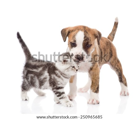 puppy kissing kitten. isolated on white background - stock photo