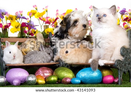 Puppy, kitten, bunnies, rabbits, chicks with easter eggs, picket fence, flowers and lawn - stock photo