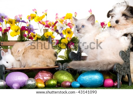 Puppy, kitten, bunnies, rabbits with easter eggs, picket fence, flowers and lawn - stock photo