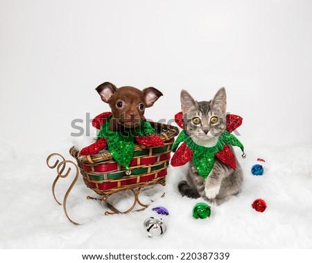 Puppy Kitten Christmas On White - stock photo