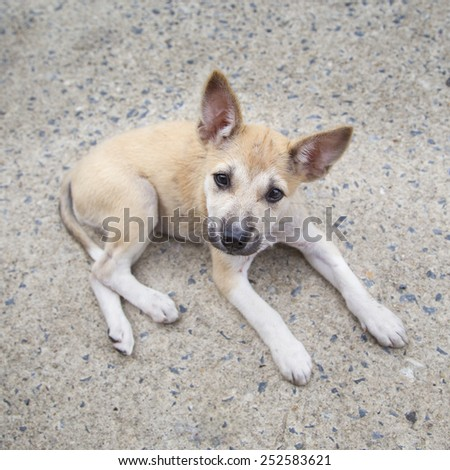 Puppy  lay down on cement floor ,curious looking straight. - stock photo