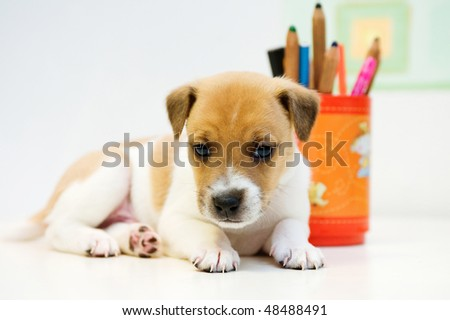 Puppy lies jack russell next to an orange tin of colored pencils