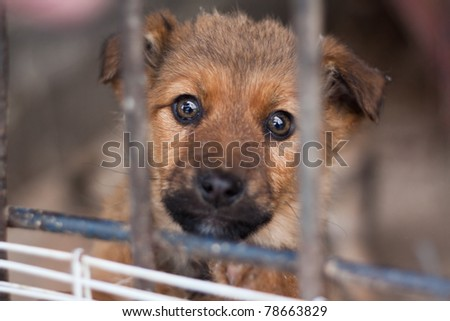 Puppy locked in the cage - stock photo