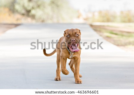 Puppy looking at the camera while running