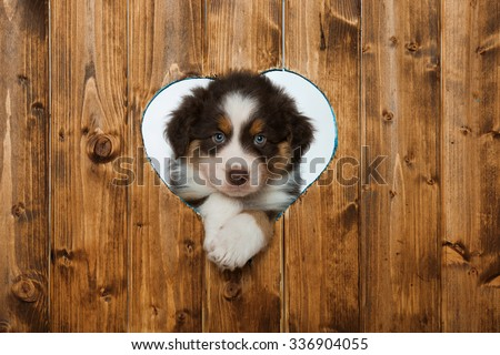 Puppy looks through a heart in the wall - stock photo
