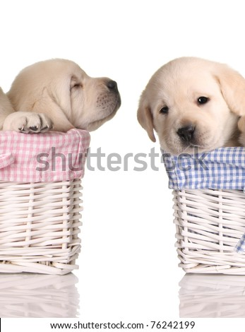 Puppy love, sleeping puppies in pink and blue baskets. - stock photo