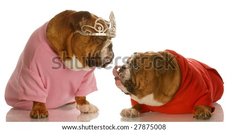 puppy love - two english bulldogs dressed up in costumes showing loving affection towards each other