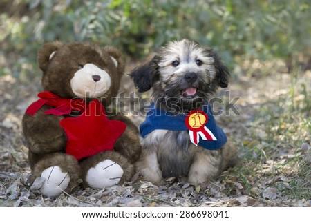 Puppy love with stuffed animal friend - stock photo
