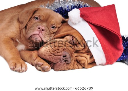 Puppy lying on its mom, both waiting for Christmas - stock photo