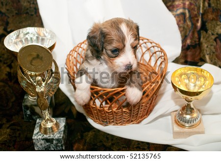 Puppy of breed the Chinese crested dog and Cups. Shallow DOF - stock photo