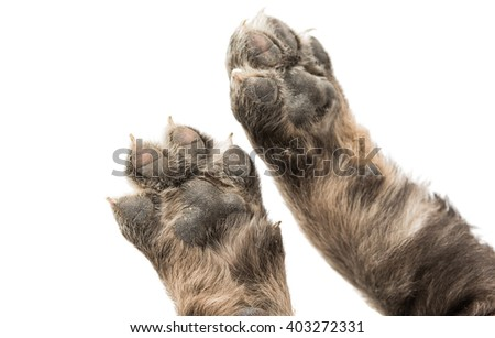 puppy paw isolated on white background - stock photo