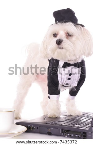 puppy paws on computer - stock photo