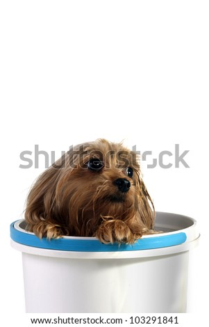 Puppy playing into a bucket