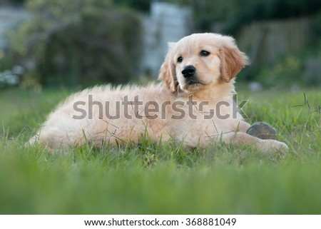 Puppy playing with ball on grass - stock photo
