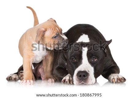 puppy playing with his mother - stock photo