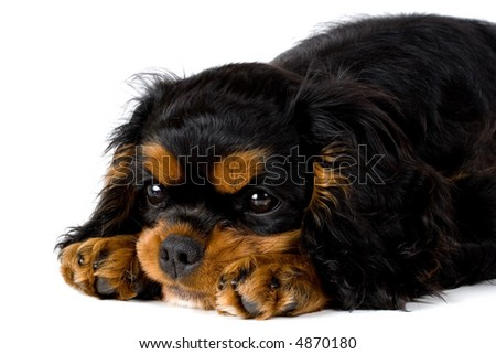 Puppy resting - stock photo