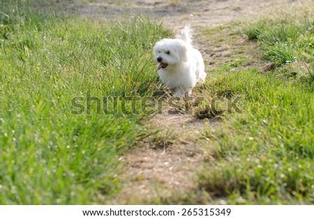 Puppy running in nature - stock photo