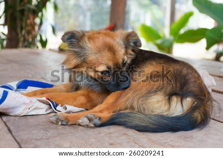 puppy self cleaning  tick and flea - stock photo