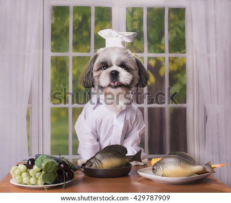puppy shih tzu prepares delicious healthy lunch