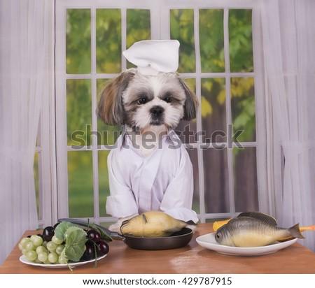 puppy shih tzu prepares delicious healthy lunch - stock photo