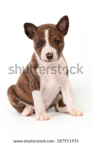 Puppy sits with brown spots on white background