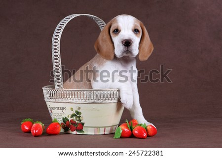puppy sitting in a basket with strawberries