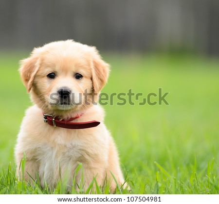 Puppy Sitting In the grass with copyspace on the right. - stock photo