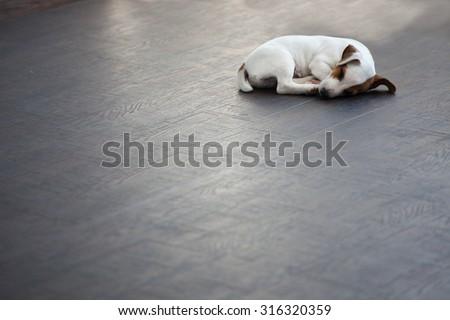 Puppy sleeping at warm floor. Dog - stock photo