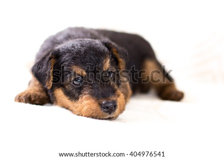 Puppy sleeping close-up
