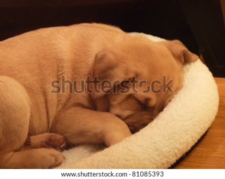 Puppy sleeping in his bed - stock photo
