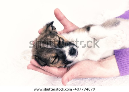 Puppy sleeping in the hands