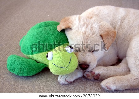 puppy sleeping next to friend turtle - stock photo