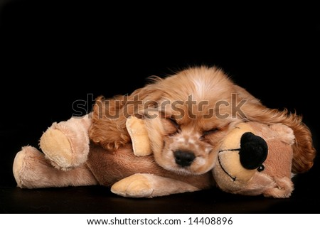 Puppy sleeping on bear - stock photo