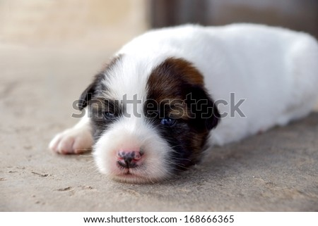 Puppy sleeping on the cement floor.