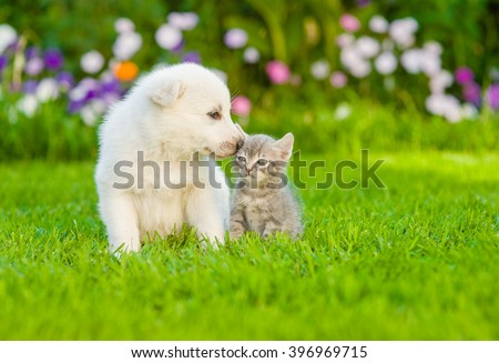 Puppy sniffing kitten on green grass - stock photo