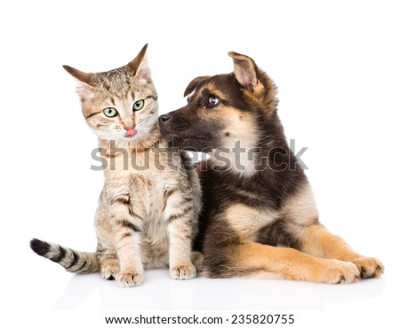 Puppy sniffs cat. isolated on white background - stock photo